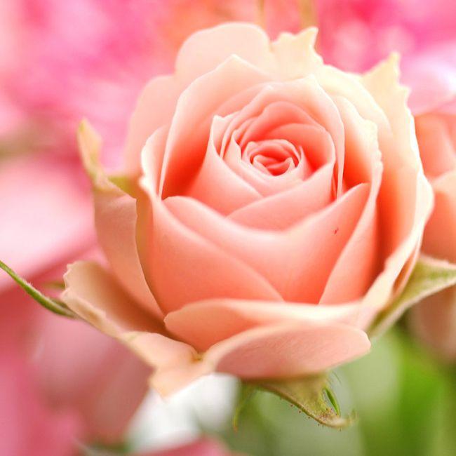 Набор Алмазная мозаика Цветы 20*20 см