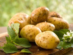 Картофель желтый высший сорт