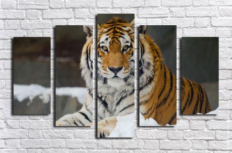 Модульная картина Животные 4