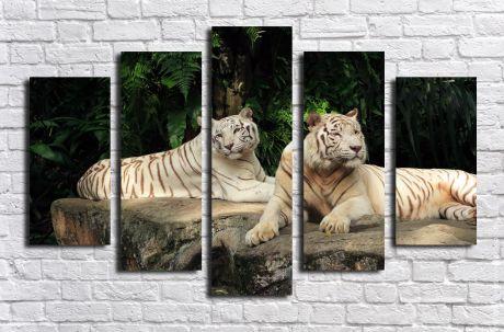 Модульная картина Белые тигры