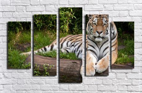 Модульная картина Грациозный тигр