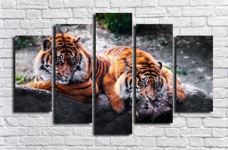 Модульная картина Тигр с тигрицей