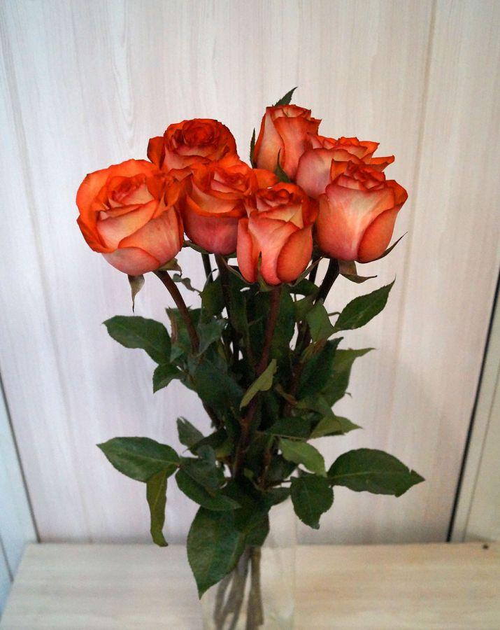 7 роз - Игуана (60 см)