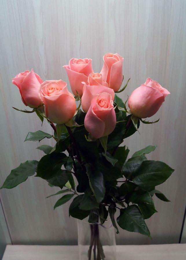 7 роз - Хирмоса (60 см)