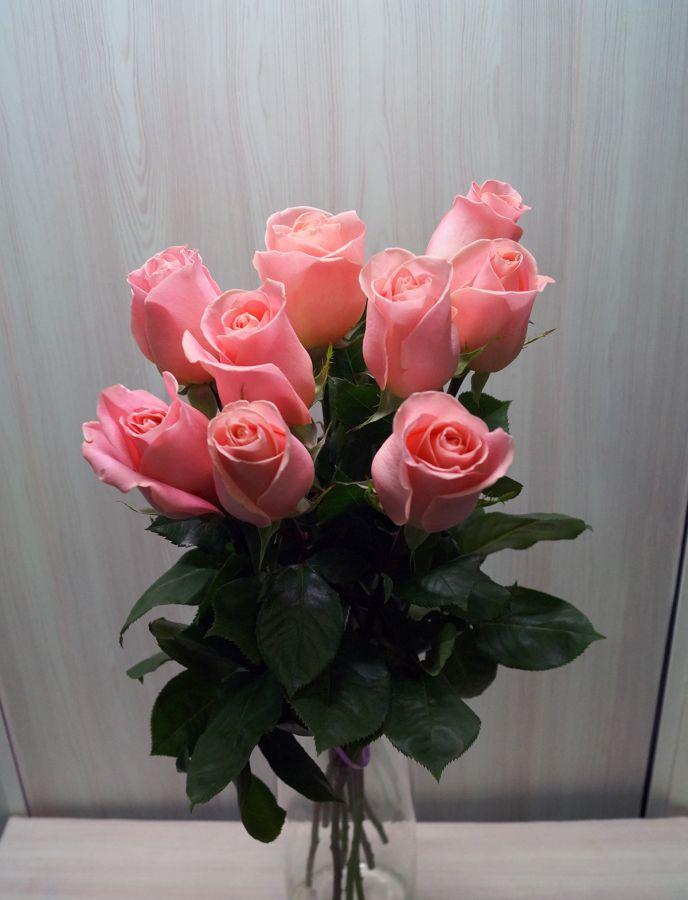 9 роз - Хирмоса (60 см)