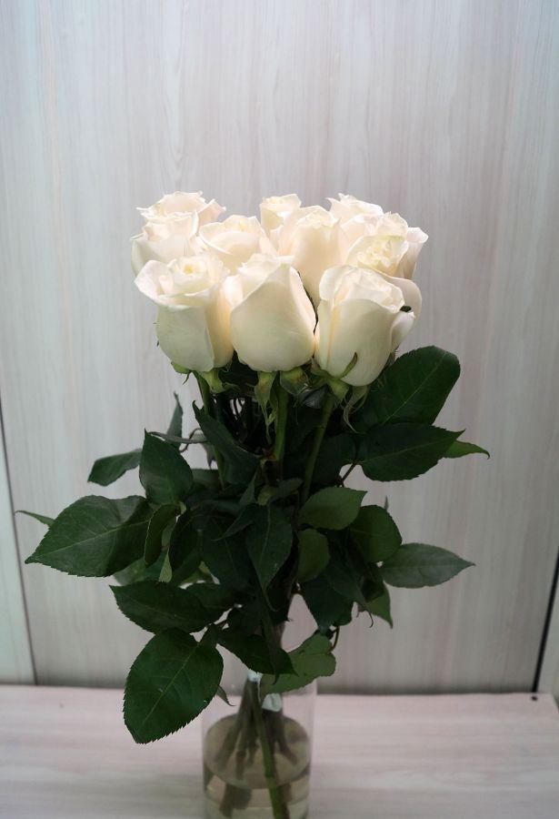 11 роз - Венделла (60 см)