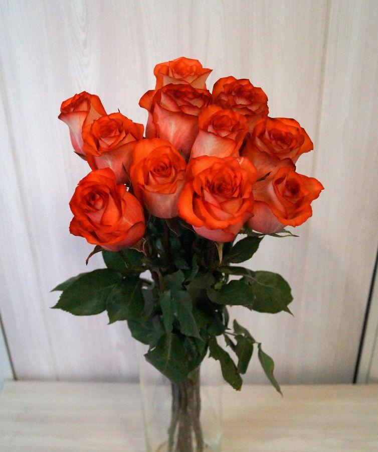 11 роз - Игуана (60 см)