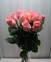 11 роз - Хирмоса (60 см)