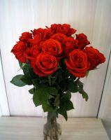 15 роз - Нина (60 см)