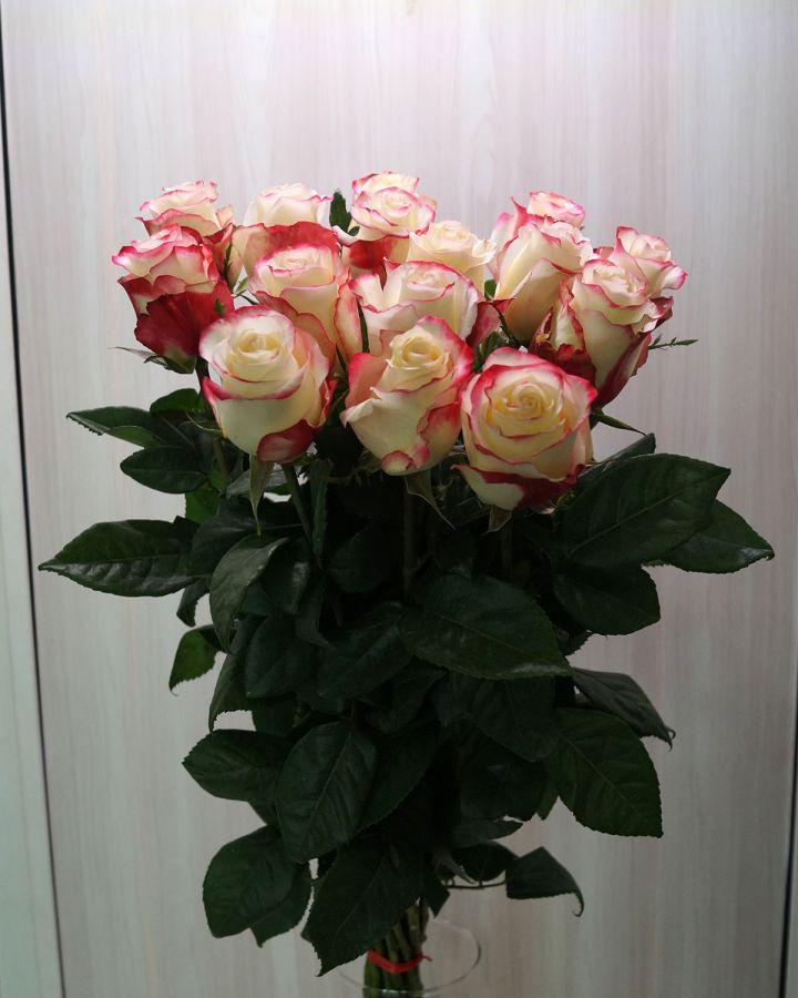 15 роз - Свитнес (60 см)