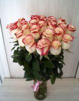 25 роз - Свитнес (60 см)