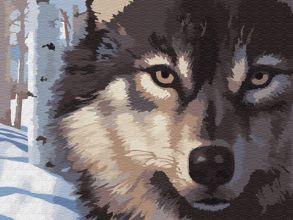 Картина по номерам «Волчий взгляд» 30x40 см