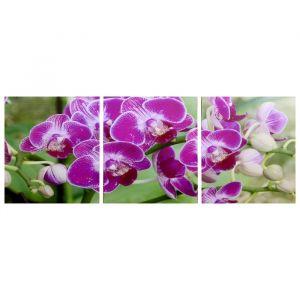 "Модульная картина ""Веточка орхидеи"" (3-35х35) 35х105 см 4983610"