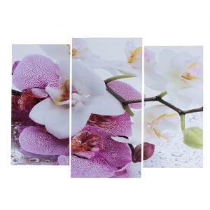 """Модульная картина """"Краповая орхидея""""  (2-25х52; 1-30х60) 60х80 см   3981588"""