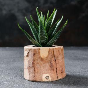 """Кашпо для растения """"Эко-спил"""", d-6 см, h-5 см, микс"""