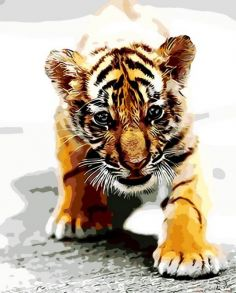 Картина по номерам «Тигрёнок» 40x50 см