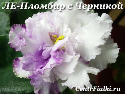 ЛЕ-Пломбир с Черникой (Е.Лебецкая)