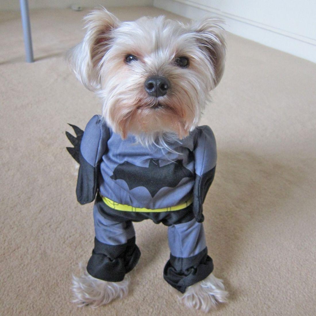 Костюм для собак Бэтмен