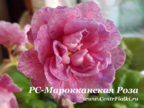 РС-Марокканская Роза