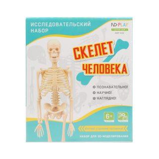 Набор исследовательский Скелет человека