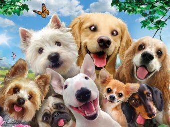 Пазл Super 3D Собаки селфи, 48 дет.