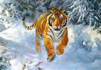 Пазлы 500 Амурский тигр