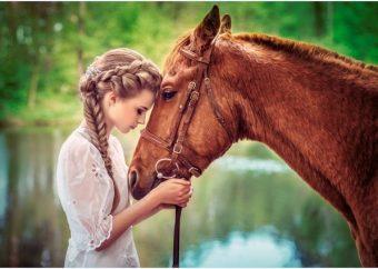 Пазлы 500 Девушка и лошадь