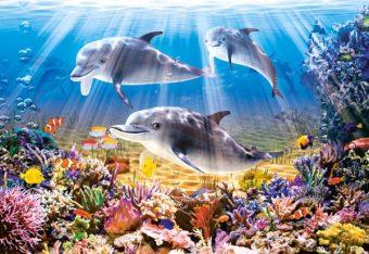 Пазлы 500 Дельфины