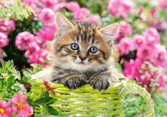 Пазлы 500 Котёнок в саду