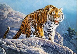 Пазлы 500 Тигр на скалах