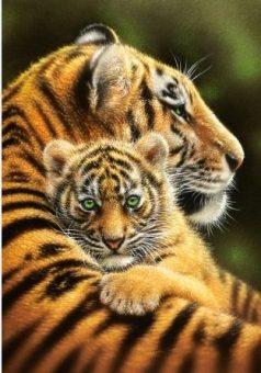 Пазлы 500 Тигры