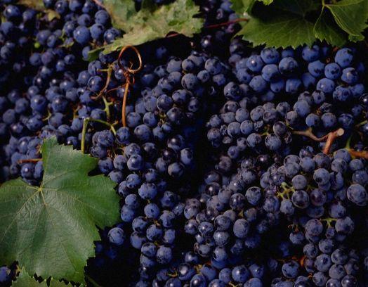 Виноград черный (цена за кг)