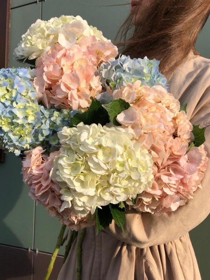 Гортензии разных цветов поштучно