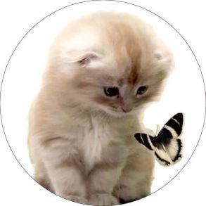 Вышивка крестиком «Милый котенок с бабочкой» 21x21