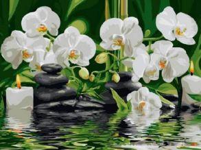 Картина по номерам «Орхидеи» 30x40 см