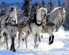 Картина по номерам «Три белых коня» 40x50 см