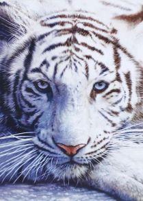 Картина по номерам «Белый тигр» 40x50 см