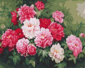 Картина по номерам «Куст пионов» 40x50 см
