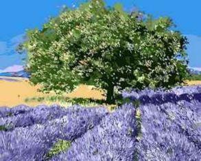 Картина по номерам «Дерево на лавандовом поле» 40x50 см