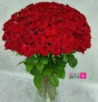 101 Роза сорта Ред Наоми