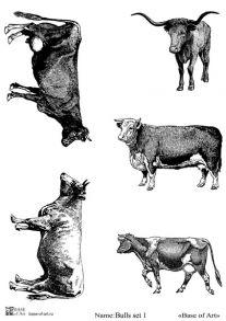 Bulls set 1