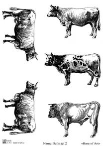 Bulls set 2