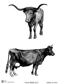 Bulls set 3