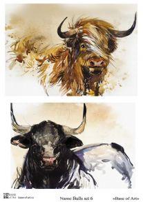 Bulls set 6
