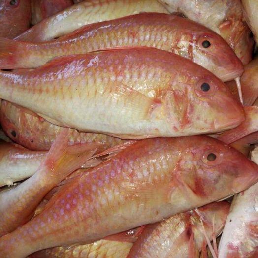 Барабулька, Индонезия (цена за кг)