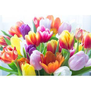 """Картины на подрамнике """"Тюльпаны"""" 40*50 см   4194735"""