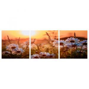 """Модульная картина """"Ромашки в закате"""" (3-35х35) 35х105 см 4983602"""