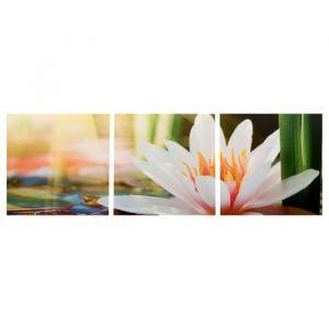 "Модульная картина ""Цветущий лотос"" (3-35х35) 35х105 см 4983631"