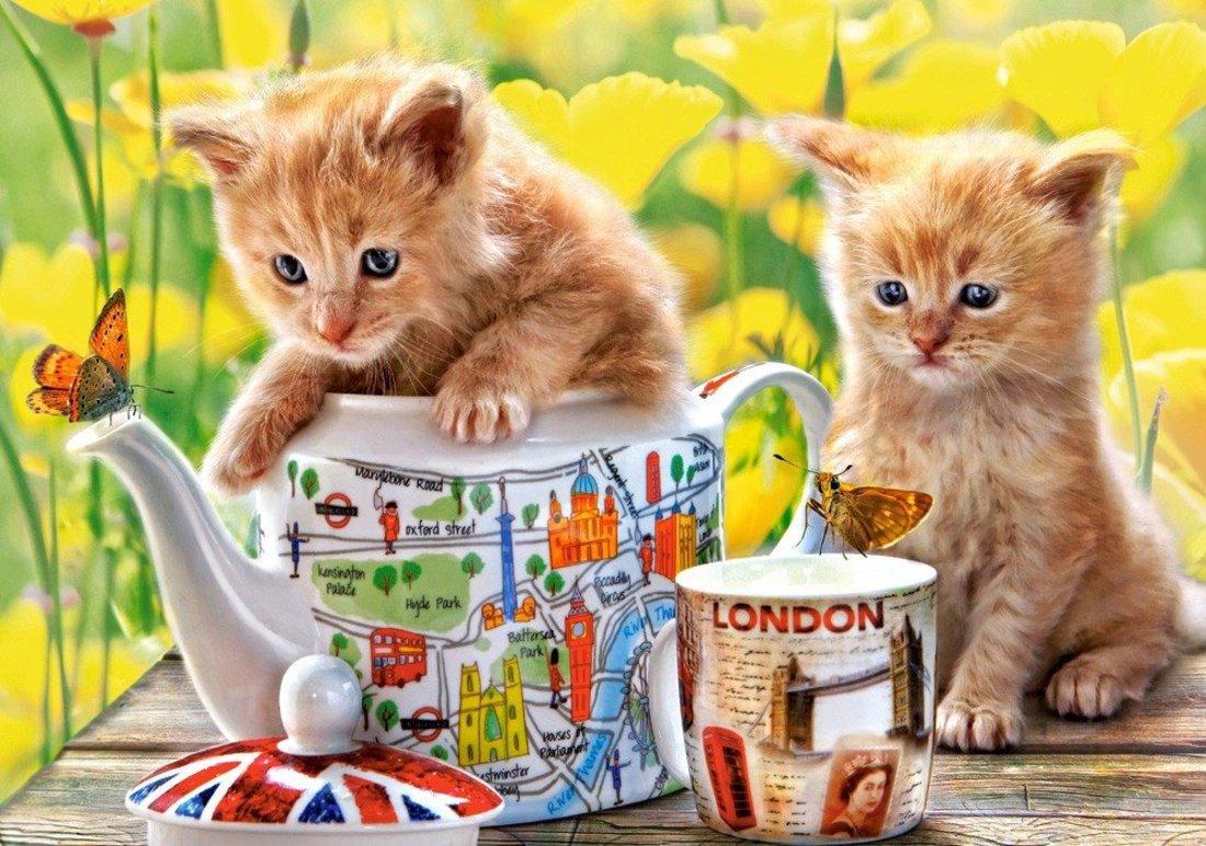 Пазлы 500 Время чаепития - котята