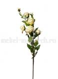 Роза кустовая белая 9F27994-4269